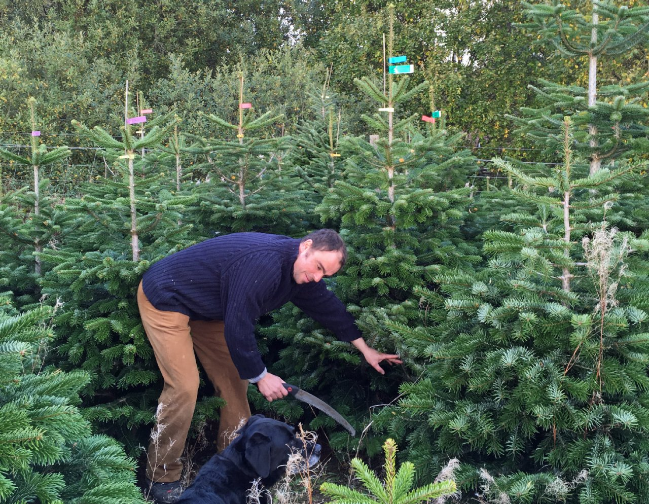 Xmas Trees For Sale On The Black Isle Sylvestrus Ltd